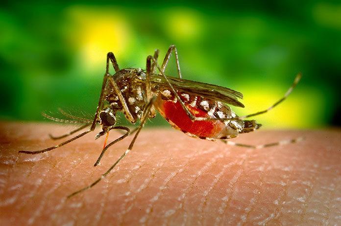 Jak pozbyć się komarów
