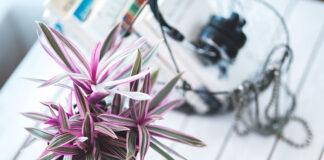 donice na kwiaty